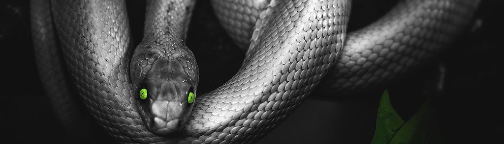 Snake Ransomware Slithers Through Networks